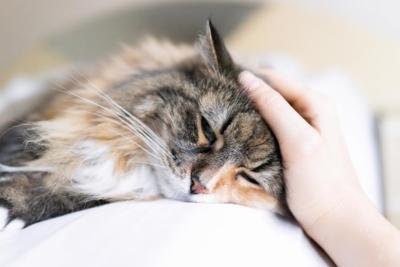 корм для кошек аллергиков