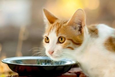Специализированный лечебный корм для кошек